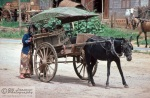 A horse or mule with carriages were a common sight in the smaller cities.
