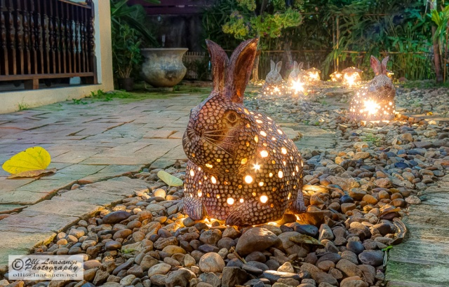 Easter bunnies in Shewe Wana (Small Forest In City), Chiang Mai
