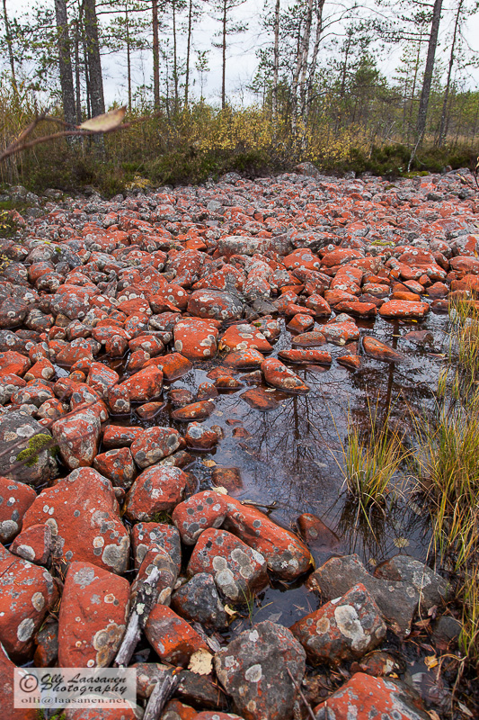 Red stones caused by Tretepohlia iolithus.  Lestijärvi, Finland, Sep 2012