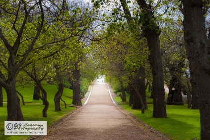 The beautiful alley of Groot Constantia.