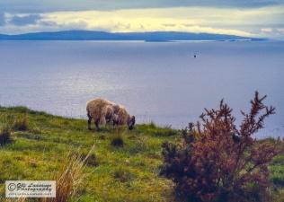 Sea scene in the Isle of Skye
